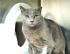 Cute shorthair kitty loves cuddles, time to bond