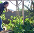 Turning food scraps into food for garden