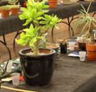 Spring plant sale at botanical garden