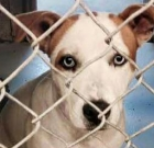 MCACC reduces fees for dogs, cats