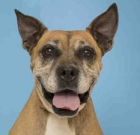 Pet of the Month: Sacha survived cancer, needs a second chance