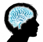 Free presentation looks at brain development