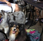 Yappy Hour returns to 32 Shea patio