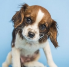 Pet of the Month: A rough start, a sweet finish