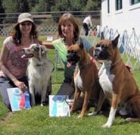 Local dog trainer pet-training services