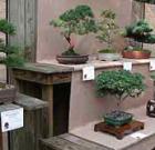 Bonsai, pottery exhibit at garden