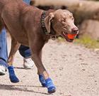 Put dog's safety first in summer heat