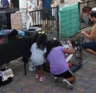 Pet adoption event held at All Saints