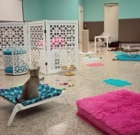 Cat Cafe visits North Phoenix