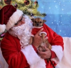 Pet photos with Santa benefit dog rescue