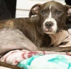 Tougher penalties for animal abusers