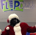 Flip, swing, joust and see Gorilla Claus