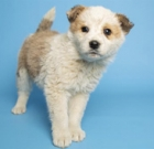 Fluffy, energetic Dot needs loving home