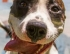 Coronavirus puts hold on pet adoptions