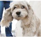 Plan for pet emergencies
