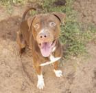 Liam is big, smart active pup