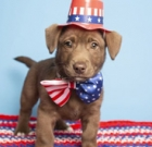 Prepare pets to stay calm during fireworks