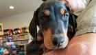 Kodi's to provide dog dental clinic