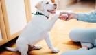 Socialize your puppy during pandemic
