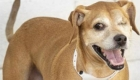 Humane Society waives fees for older pets
