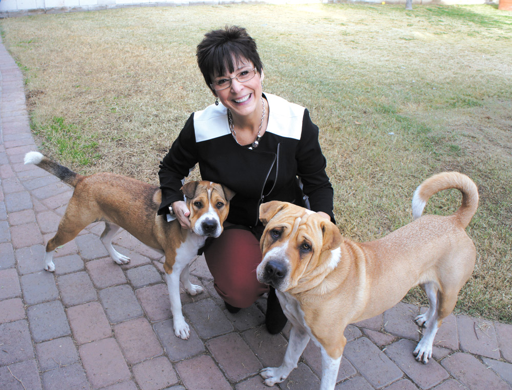 North Central resident Linda Kuhn's two Shar-Pei and St. Bernard mixes, Dolly (left) and Domo, made the cover of the 2014 Caring Canines Calendar produced by the AMDA Foundation (photo by Teri Carnicelli).