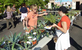 The Fall Garden Festival offers affordable plants grown by master gardeners such as Carol Stuttard, left, who are happy to share their expertise (submitted photo).