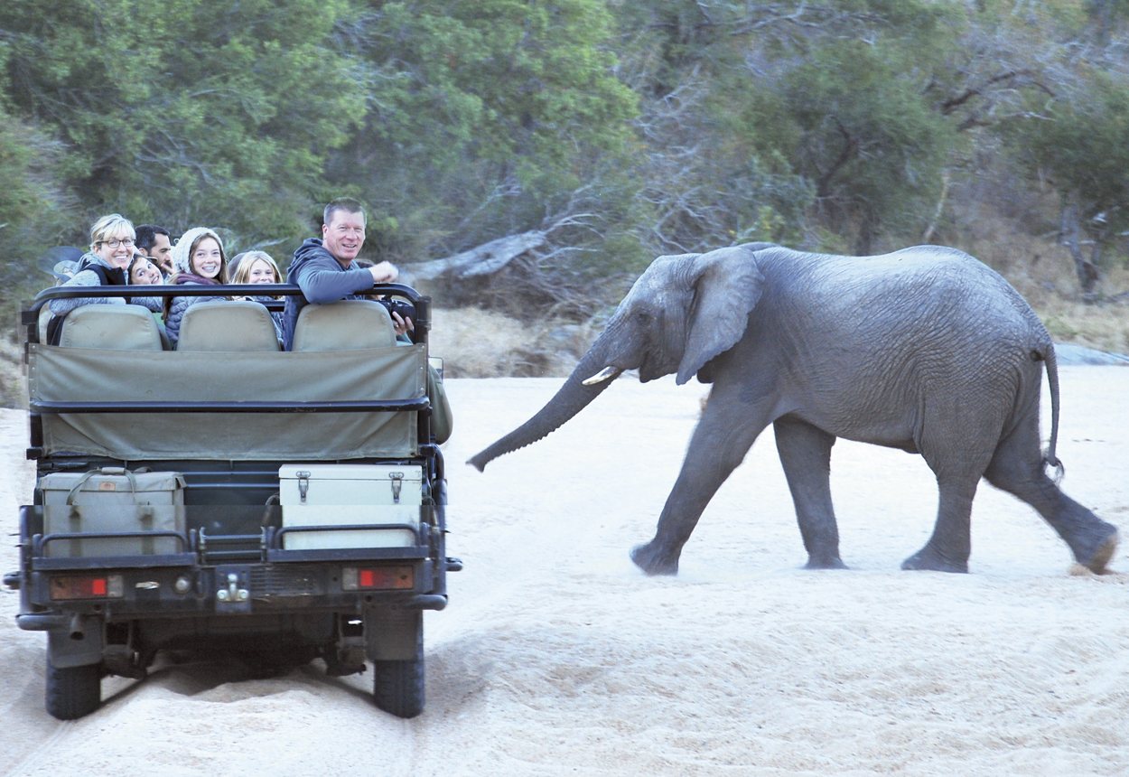 Elephant Crossing in Thornybush Game Reserve, South Africa provides fantastic animal spotting for Travel With Kids Family Adventure Tour participants: the Caris and Carlton families (photo courtesy of Travel with Kids).