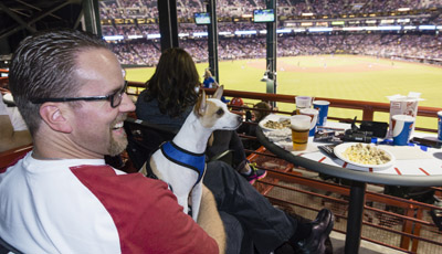 "The new PetSmart Patio at Chase Field features 30 ""Doggie Suites"" with dedicated space for four humans and one dog so that pet parents can enjoy America's favorite pastime with their best friend. Seen here is Brian Wolsko of Phoenix with his dog Jethro, a 2-year-old Rat Terrier, cheering on the D-backs as they take on the Chicago Cubs on April 10 (Mark Peterman/AP Images for PetSmart)."